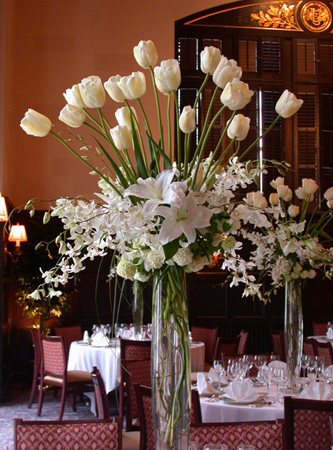 tulipesblanches015