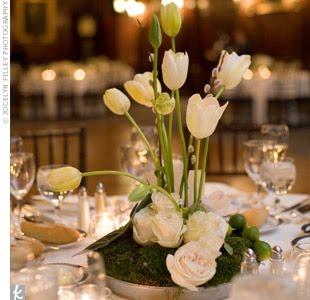 tulipesblanches018
