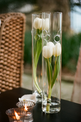 tulipesblanches020