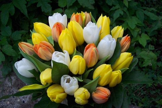 tulipesbouquet003