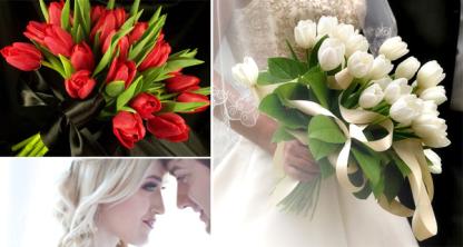 tulipescolores004