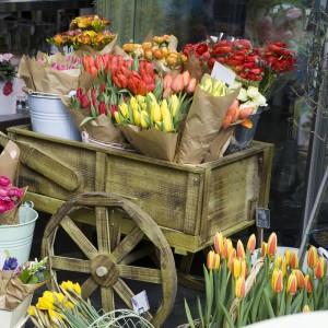 tulipescolores007