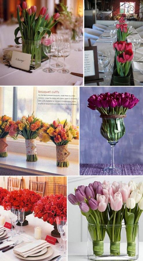 tulipescolores009