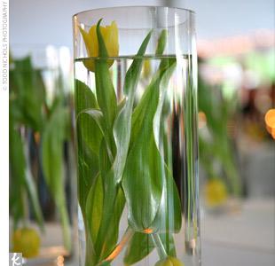 tulipesjaunes009