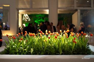 tulipesoranges007