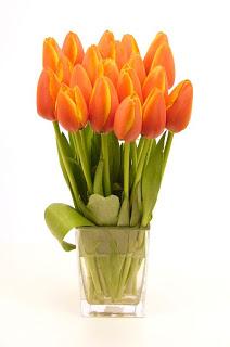 tulipesoranges008