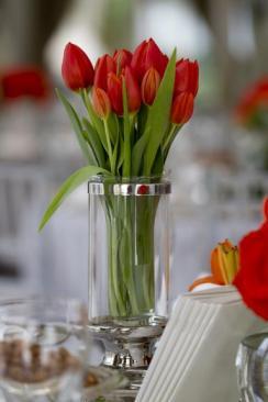 tulipesrouges008
