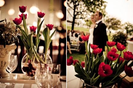 tulipesrouges010